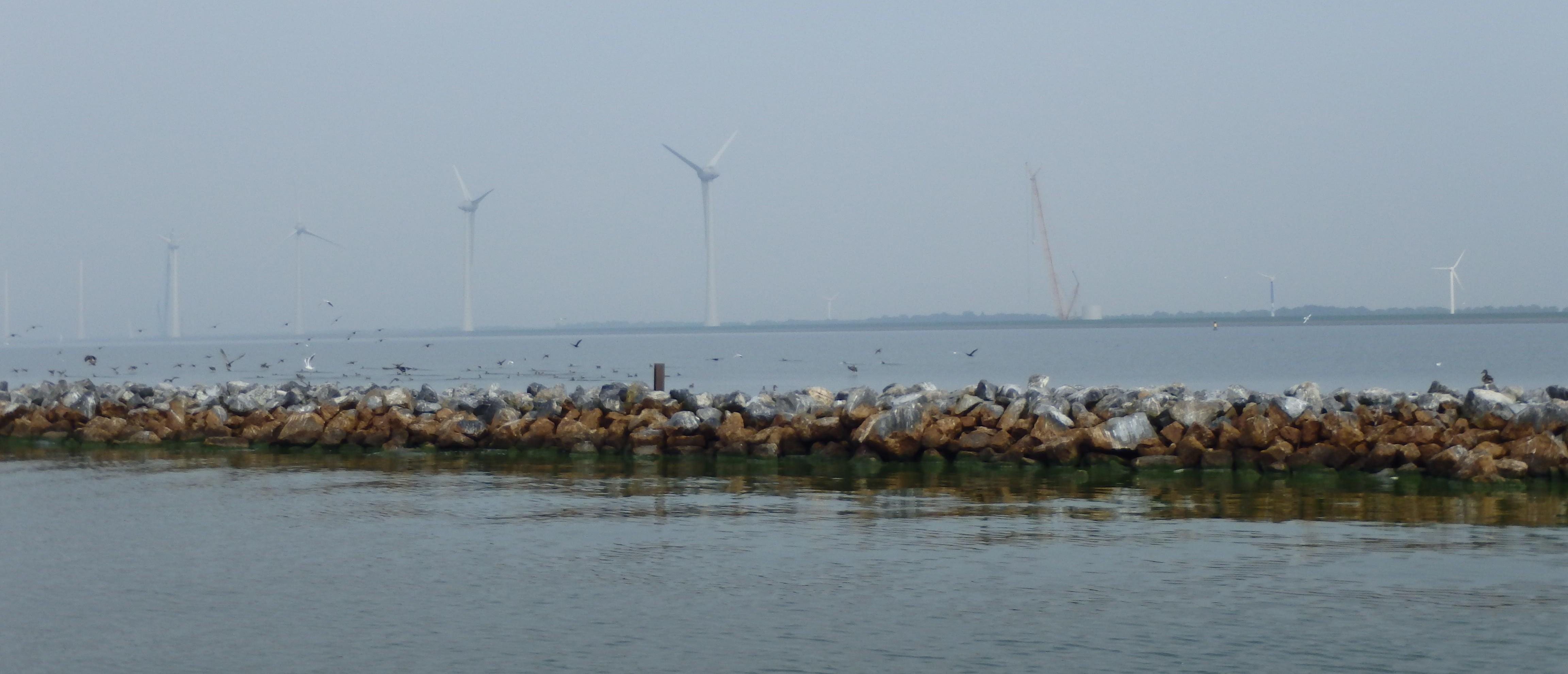 Vliegende start natuurvoorziening windpark Noordoostpolder