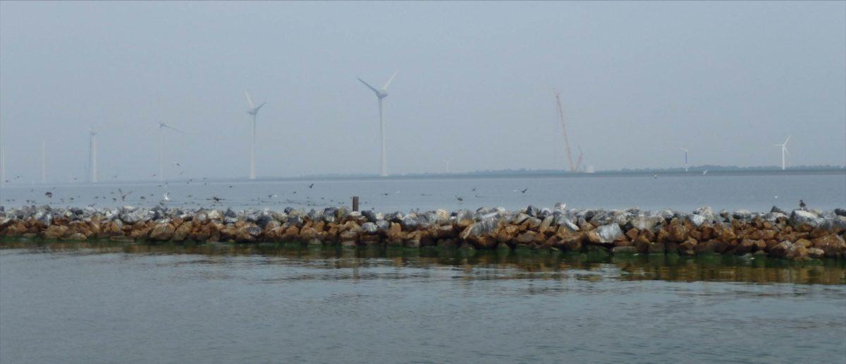 Succesvolle expertmeeting ecologie en windenergie